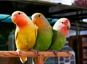 птичий-рынок
