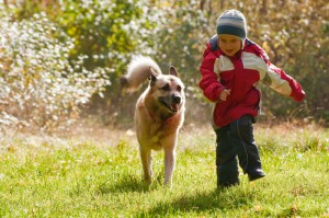 article-dog-winter-exercise.ashx