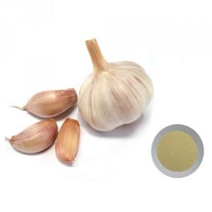 dehydrate-garlic-powder-500x500