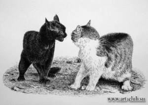 med_otshelnik-cats