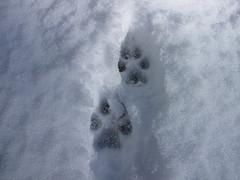 Зимние игры на улице_3